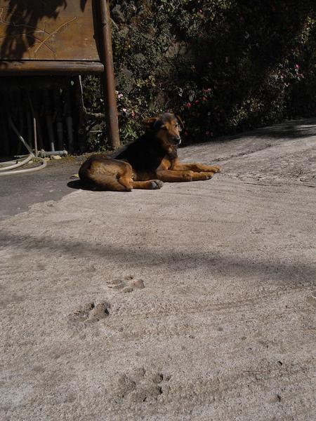 農場的狗狗毫無懷疑地被叫做小黑