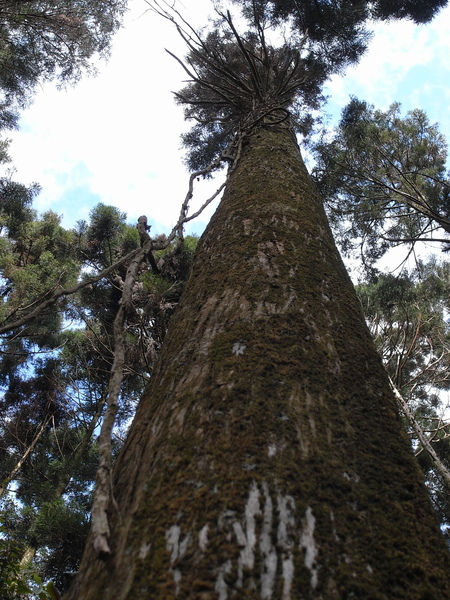 深山的樹木都高得令人心生敬畏