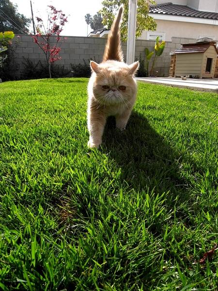 這是我們最愛的大雄,他是加菲貓喔!