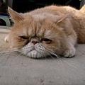 對狗感到無奈,對貓生感到百無聊賴