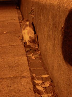 霹靂貓.jpg