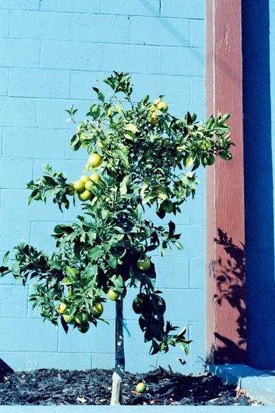 錄音室外的小樹