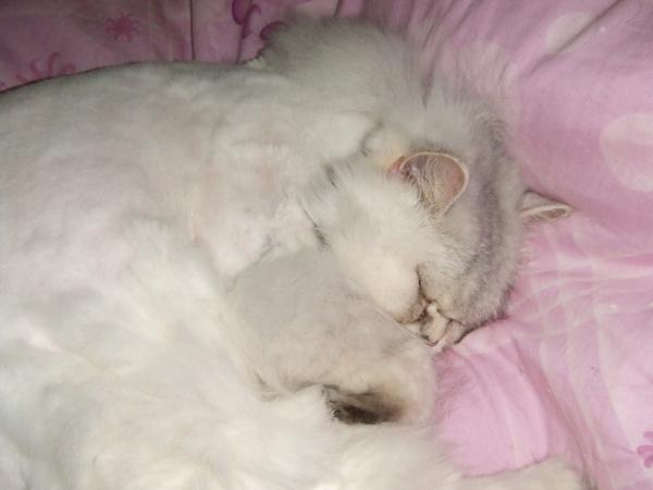 慵懶的肥貓LaLa