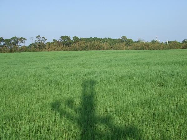 四方牧場停車場前的大草原
