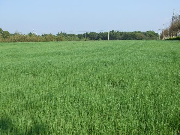 四方牧場停車場前的大草原2