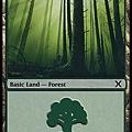 Forest (2).jpg