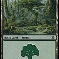 Forest (3).jpg