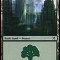 Forest (4).jpg