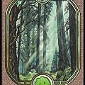 ForestUG.jpg