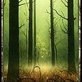 ForestUH.jpg