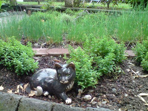 小花園的貓