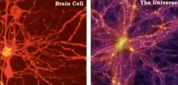 Brain Cell.jpg