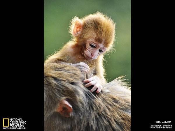 2010全球攝影中國賽區獲獎作品-獻給媽媽的愛.jpg