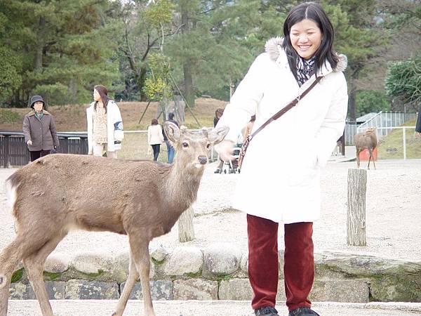 奈良鹿與華珊