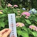 紫陽花與賞花券
