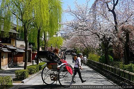 祇園櫻花季