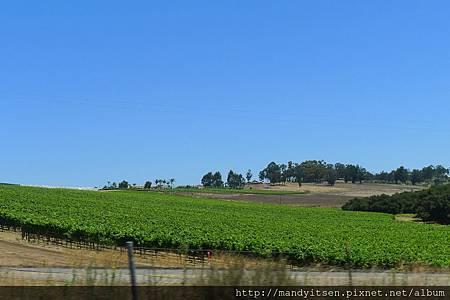 加州Santa Barbara酒鄉