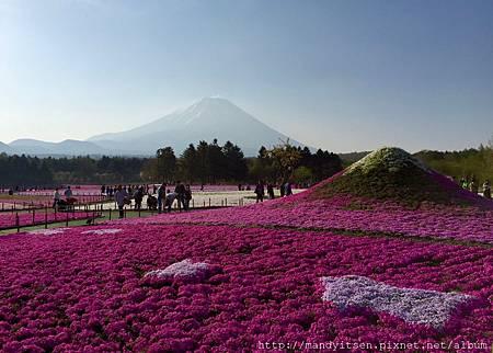 富士山本尊與芝櫻富士山