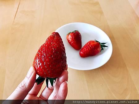 奈良「古都華」大草莓