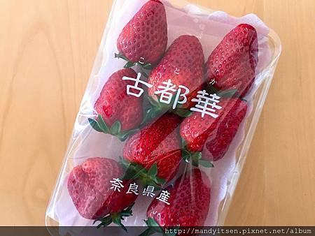 奈良「古都華」草莓