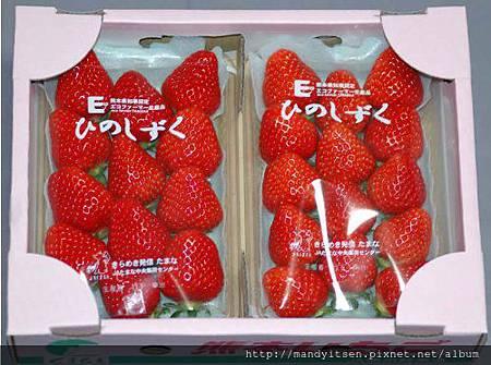 熊本ひのしずく草莓