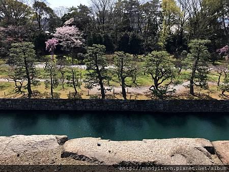 二條城內護城河與松樹
