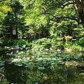 永觀堂圖書館旁池塘