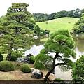 日本庭園的名木:黑松