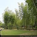 日本庭園竹林