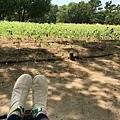 向日葵花田旁的休憩長椅