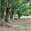 在樹蔭下乘涼的烏鴉