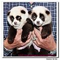 熊貓1.bmp