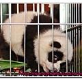 熊貓2.bmp