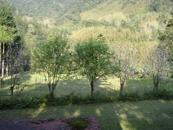 原來福山緣也有櫻花樹