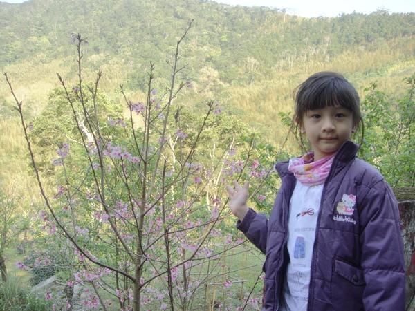 來跟櫻花合照吧