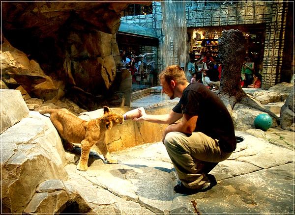MGM_Lion Habitat_5