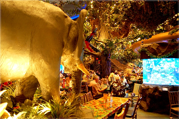 MGM_Rainforest Cafe_2