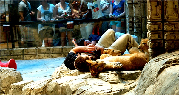 MGM_Lion Habitat_2