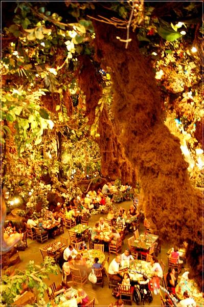MGM_Rainforest Cafe_3