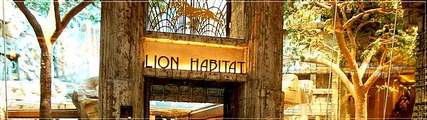 MGM_Lion Habitat