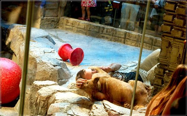 MGM_Lion Habitat_4
