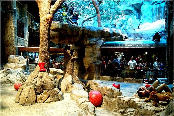 MGM_Lion Habitat_3