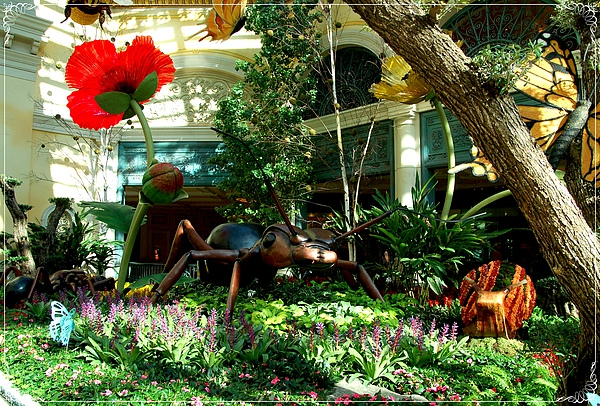 Bellagio Conservatory & Botanical Gardens_2