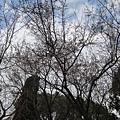 大阪城公園到嚕.JPG