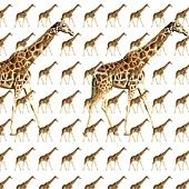 長頸鹿練習.jpg