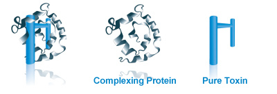 xeomin-protein-1