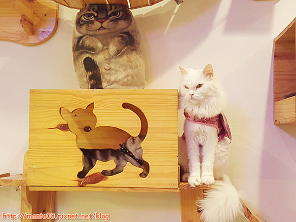 Caturdaycatcafe