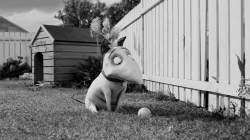 科學怪犬 (6)