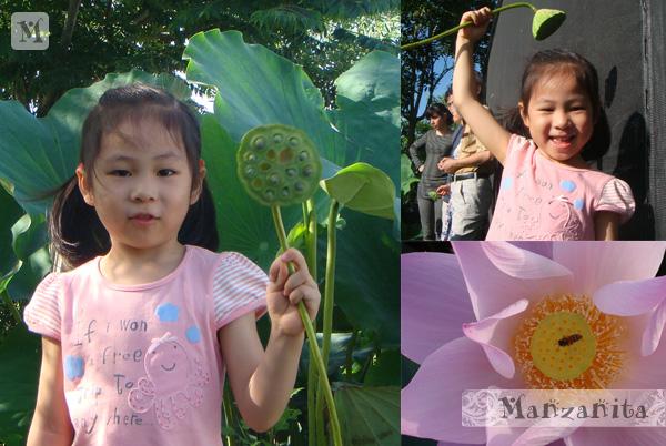 2011-6-11白河賞蓮9.jpg