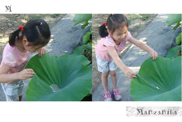 2011-6-11白河賞蓮11.jpg